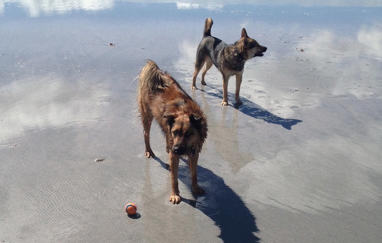 Me & Murph at the beach
